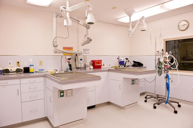 Pictures For Cats Limited Veterinary Hospital In West Hartford Ct 06110