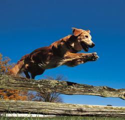Mc Donald Canine Academy - Homestead Business Directory
