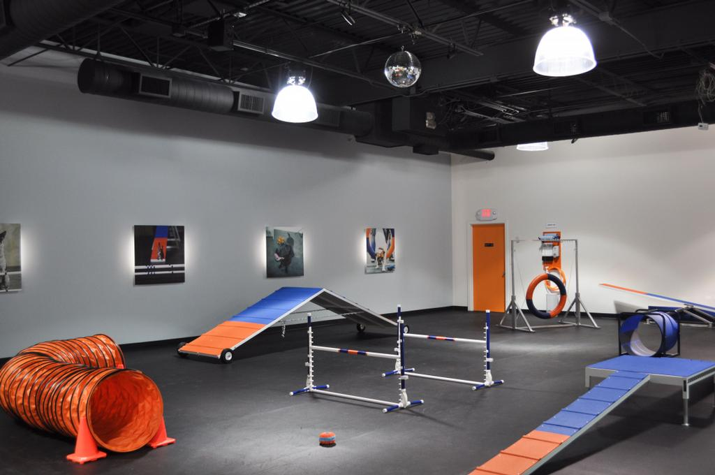 Gym from zoom room dog training in tulsa ok
