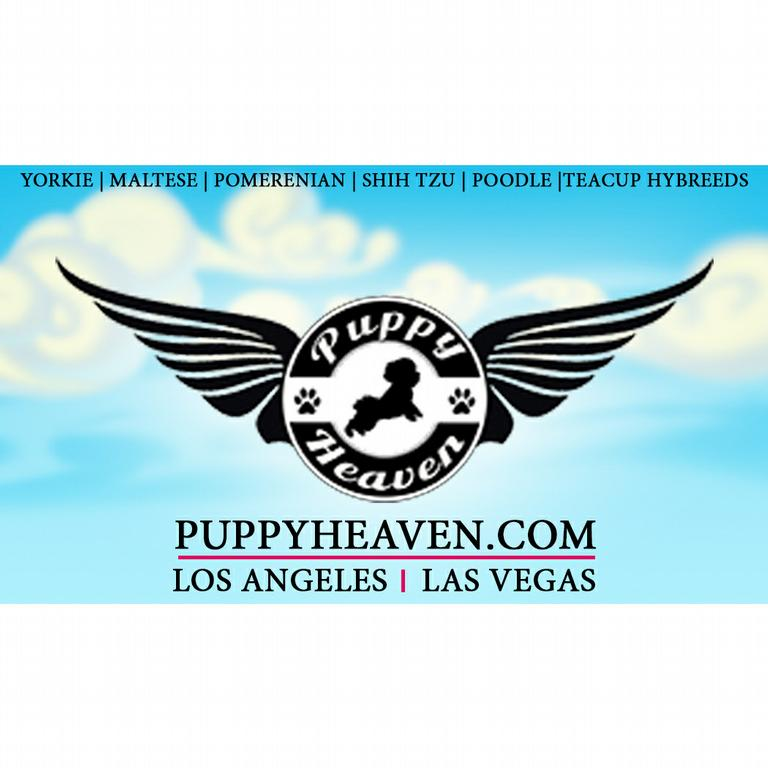Puppy Heaven Teacup Amp Toy Puppies For Sale Agoura Hills