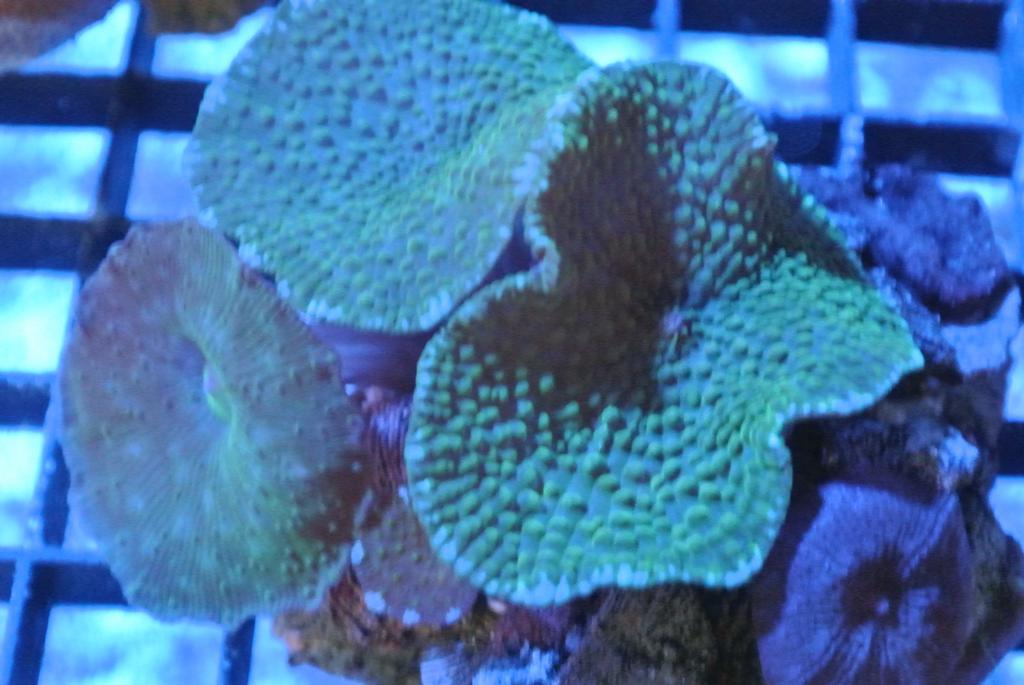 Saltwater fish for sale apple valley ca 92307 760 242 for Live saltwater fish