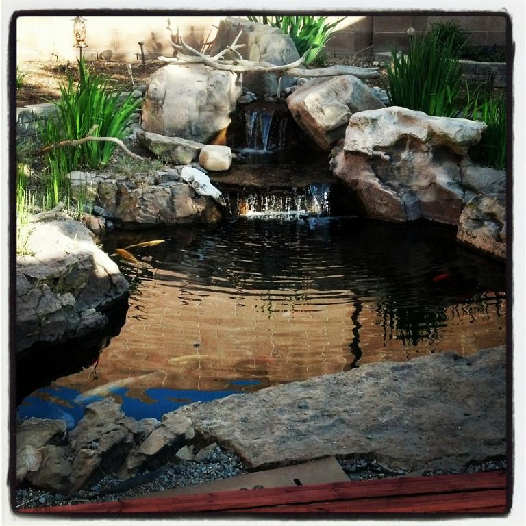 Elegant SFWG (1079) By Santa Fe Water Gardens