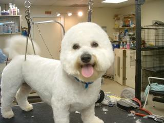 Grooming Room Pet Spa - Goose Creek, SC