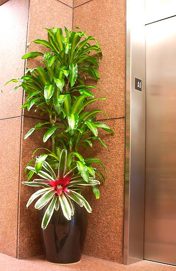 Pictures For Tropical West Designs Indoor Plant Care