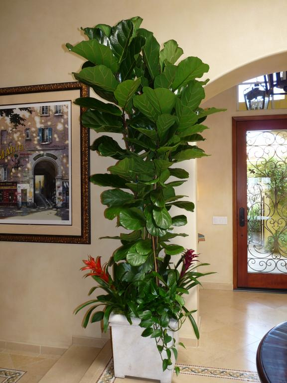 Emerald Coast Plantscapes Interior Plant Service
