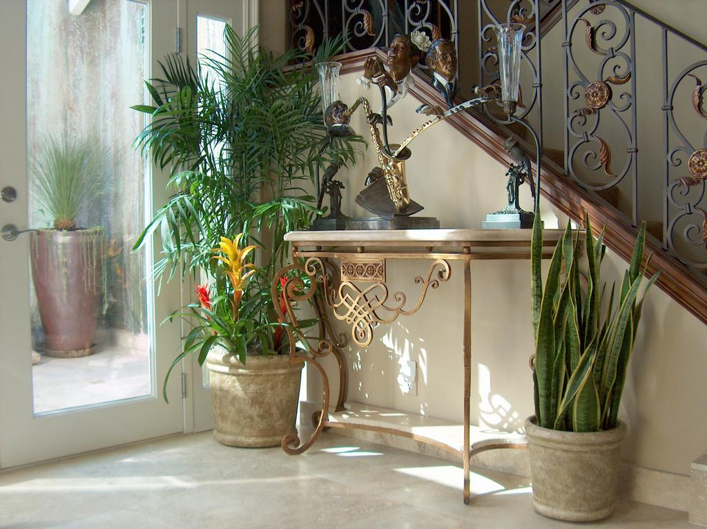 Bamboo And Sansevieria With Bromeliad House Plants From