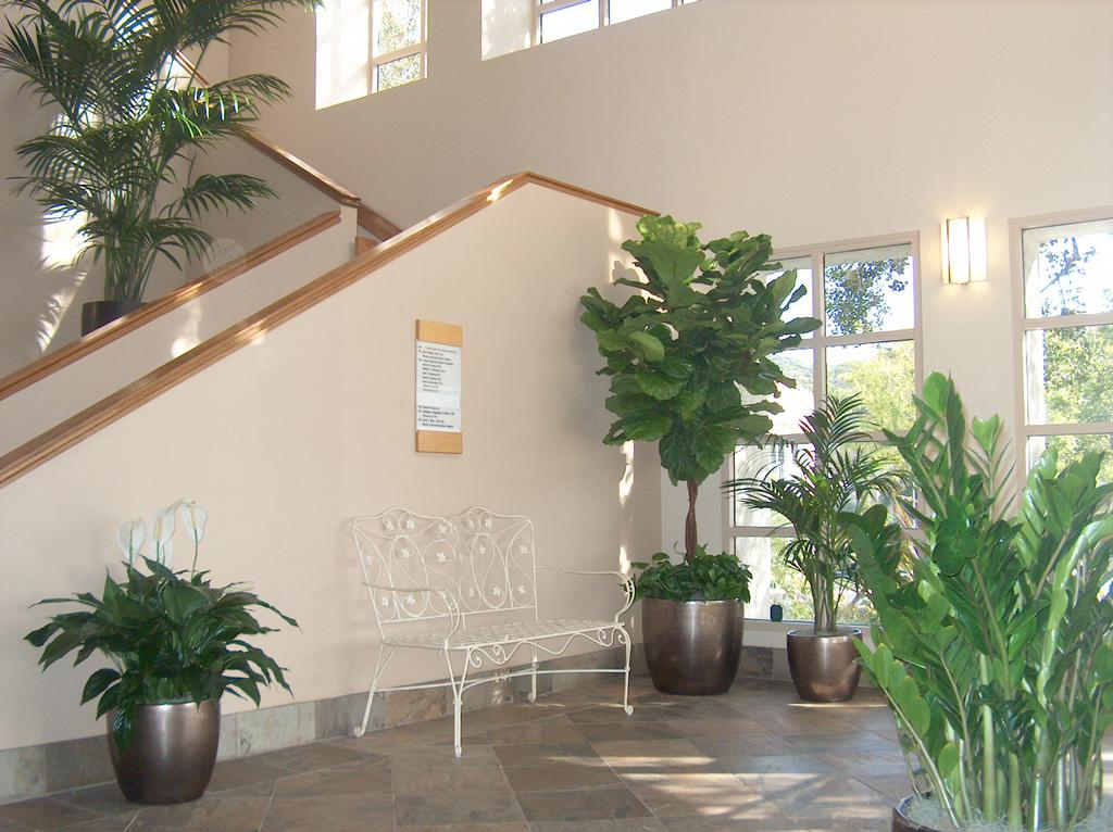 Building Lobby Plant Display From Emerald Coast