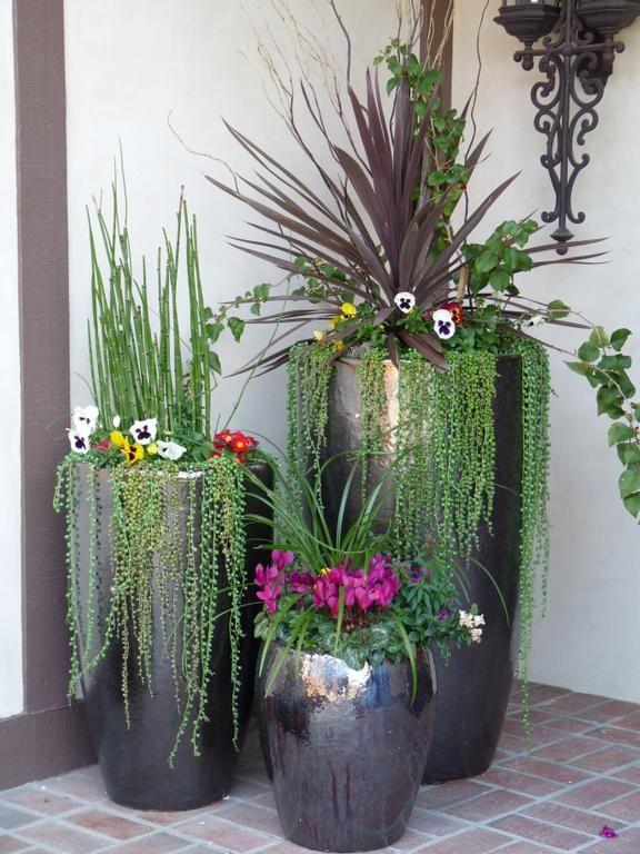 Outdoor Potted Plant Ideas