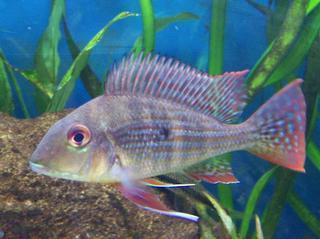 Capitol Aquarium - Sacramento, CA