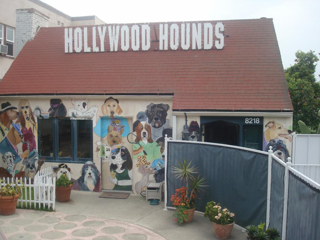 Hollywood hounds cage free dog boarding 323 650 5551 los for Dog hotel los angeles