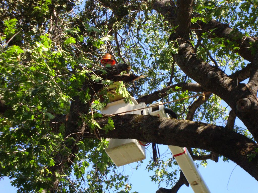 Tree Removal In Tampa