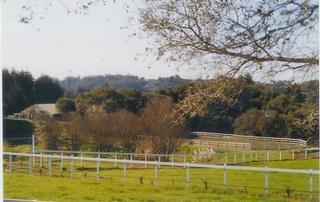 Morning Sun Ranch - Watsonville, CA