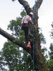 Ron Raby's Tree Service - Chattanooga, TN