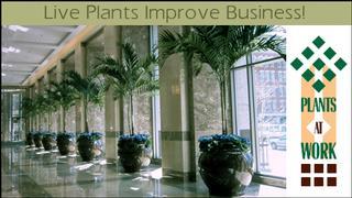 Plantscape Interior - Macon, GA