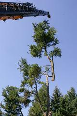 Barnett Tree Care & Top Line Tree Service - Seattle, WA