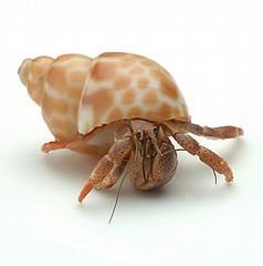 Hawaii Crabs - Minneapolis, MN